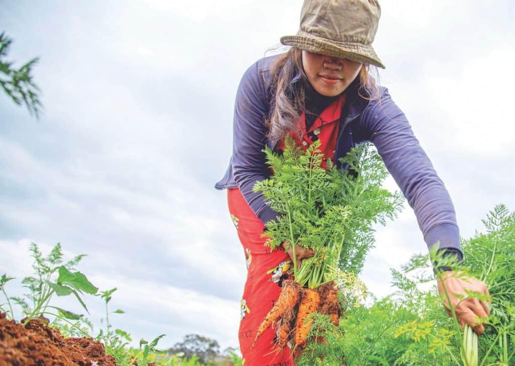 CHCI gardening image cropped